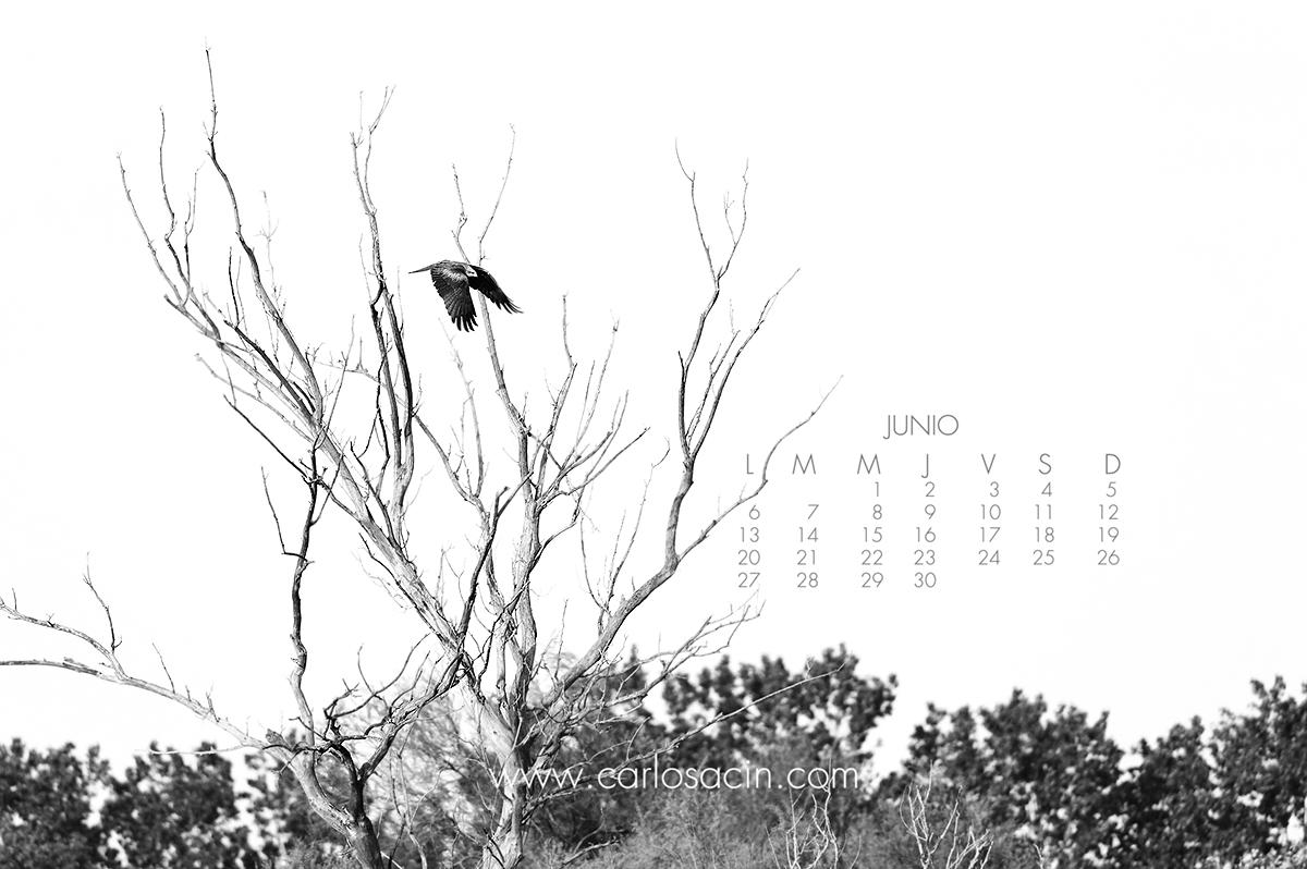 junio_2